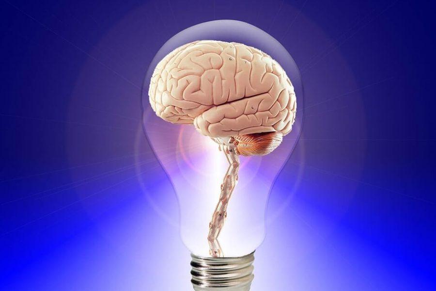10 ciekawostek na temat mózgu
