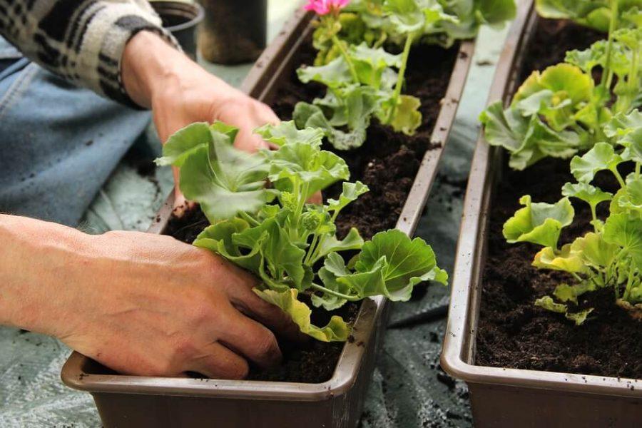 Terapia w ogrodzie? Hortiterapia poprawia zdrowie psychiczne człowieka